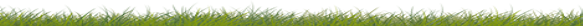 Green grass border for bottom of web page